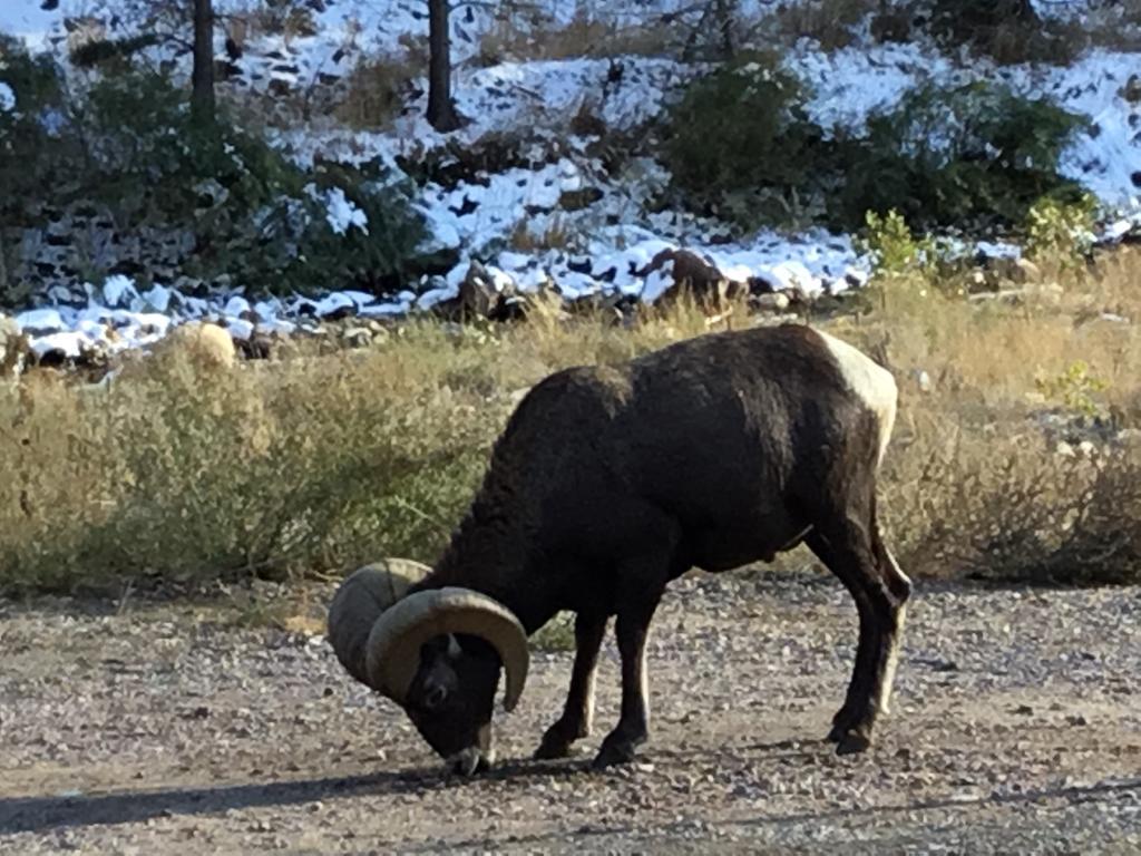 animal encounters-b4685da8-32ad-4bbf-a2b0-0e2119647e1a.jpg