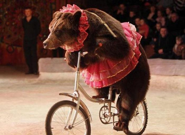 Wow!-b_id_363729_bear.jpg
