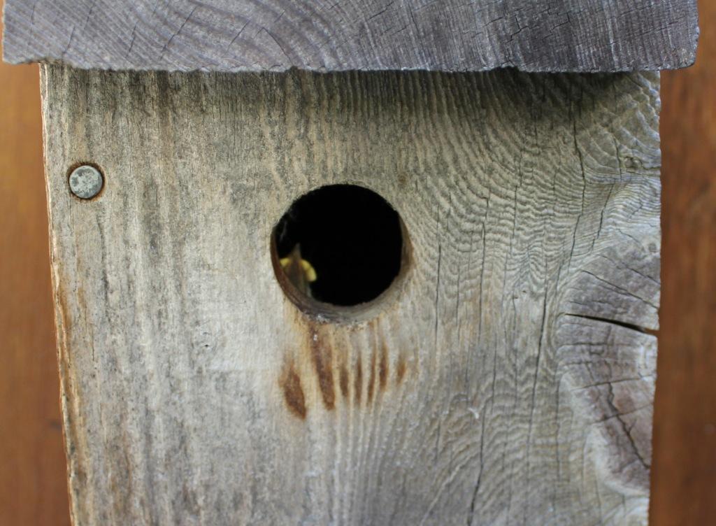 OT: Bird Pix...-baby-bird-cropped-2.jpg