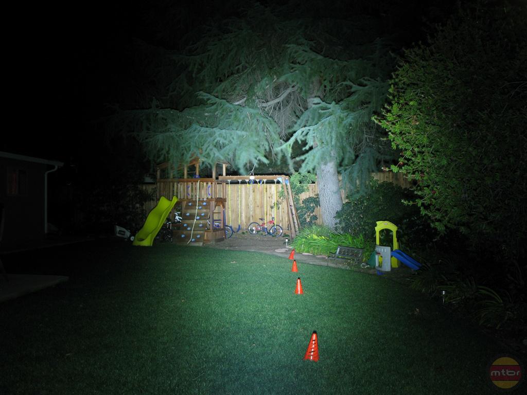 backyard-lupine-betty.jpg