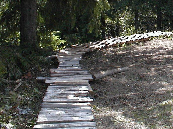 Niagara Region - Looking for trail tools.-backyard5.jpg