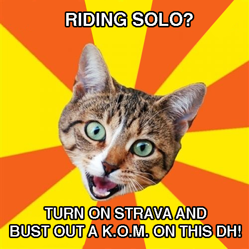 Name:  bad cat strava.jpg