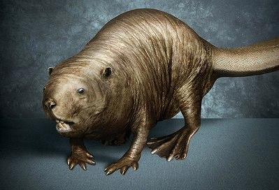 Like a shaved beaver