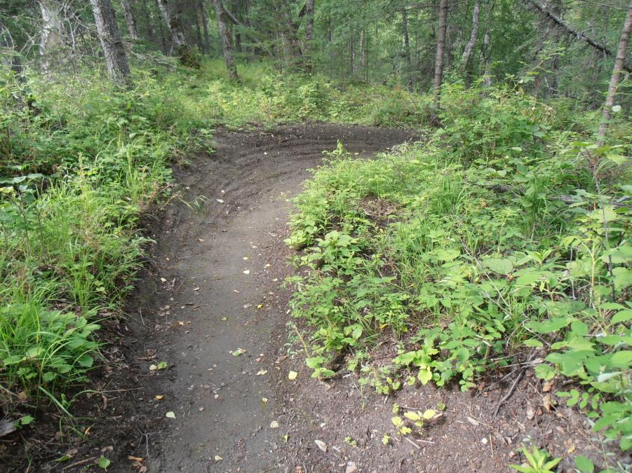 New singletrack near Palmer-beaarberry-bluff-sweep-turn.jpg