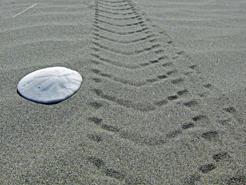 Favorite phat photos, 2012 edition.-beach_06.jpg