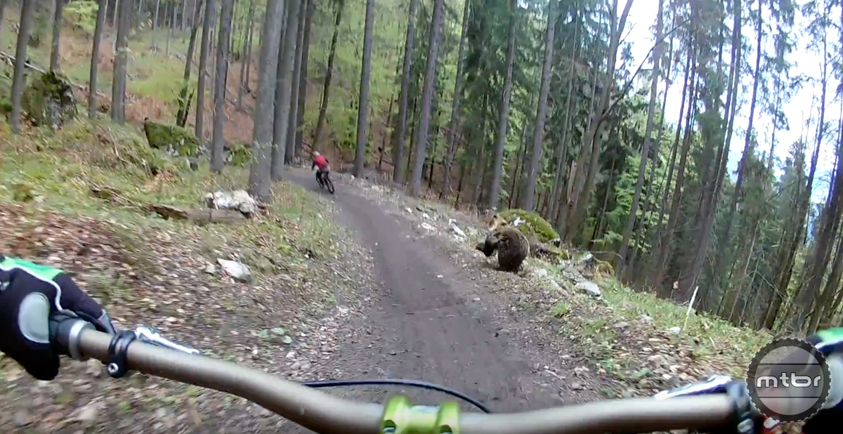 10. Mountain bikers avert charging bear