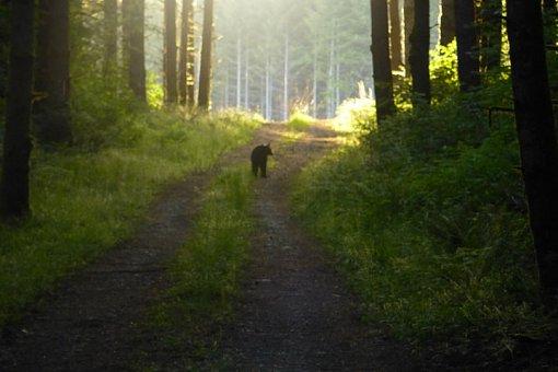 Name:  Bear 2.jpg Views: 245 Size:  33.2 KB