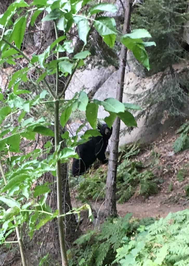 Weekend Ride Report Sept. 8th - 10th-bear.jpg
