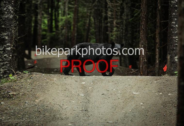Best DH/ FR Rental Bike for an AM rider at Whistler-bear.jpg