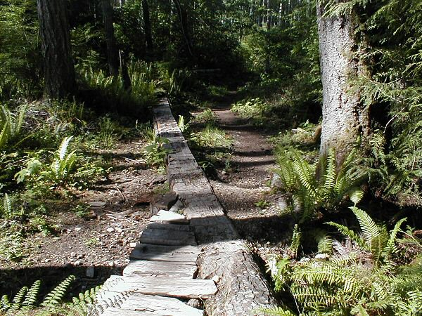 Niagara Region - Looking for trail tools.-bear4.jpg