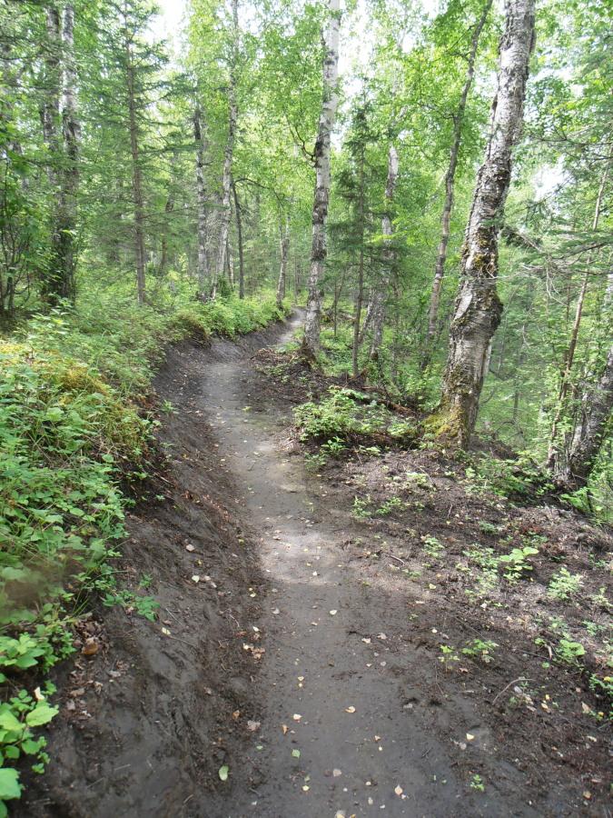 New singletrack near Palmer-bearberry-bluff1.jpg