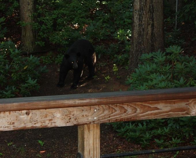 Early Bear Get's the Photo Op-beent_creek_bear_10.jpg