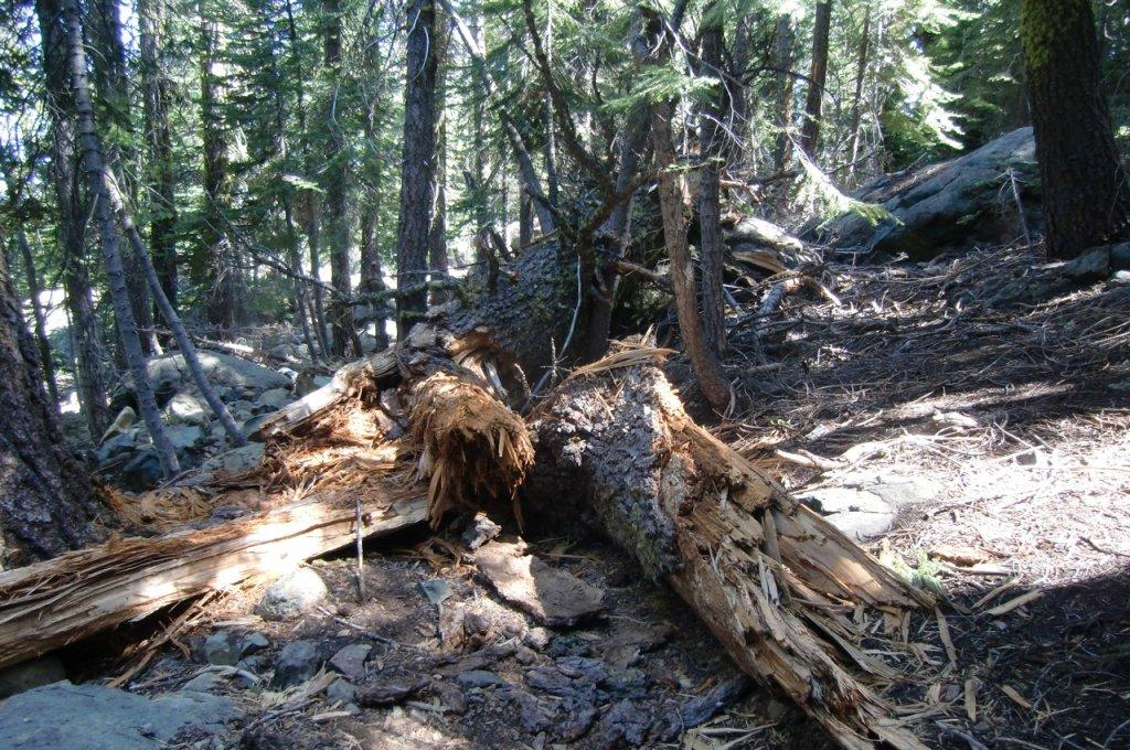 Mills Peak Trail Expansion Plans-before.jpg