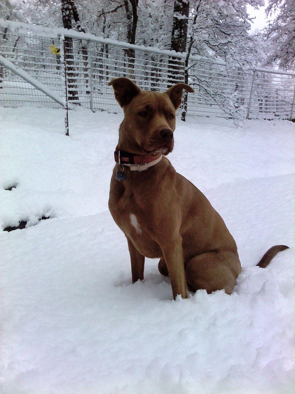 Dogs : Why?-bella9.jpg
