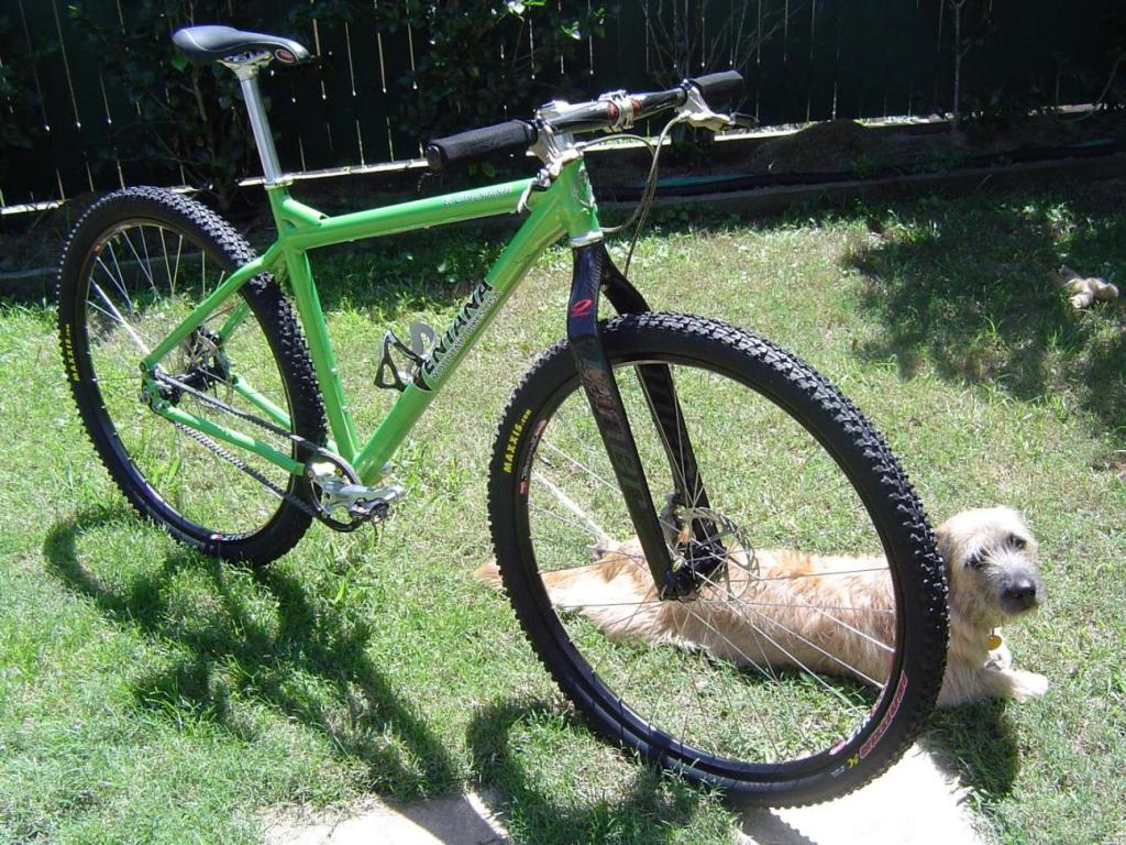 Post pics of your FULLY RIGID SS 29er-belt-drive.jpg