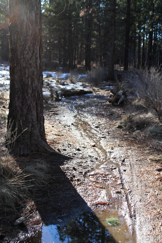 2014 - Bend Area Trail Conditions & Blow Down Thread-bens1-2.jpg