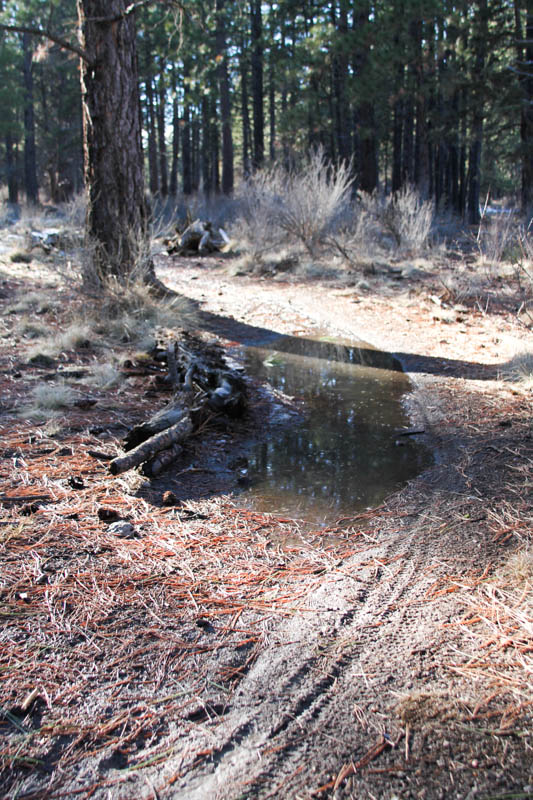 2014 - Bend Area Trail Conditions & Blow Down Thread-bens1.jpg
