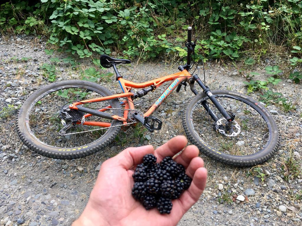 One picture, one line.  No whining. Something about YOUR last ride. [o]-berries.jpg