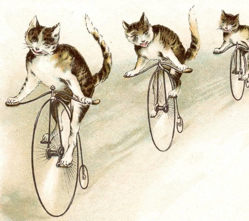 My bike shorts.-bicycle-cats-j-p-coats-thread.jpg
