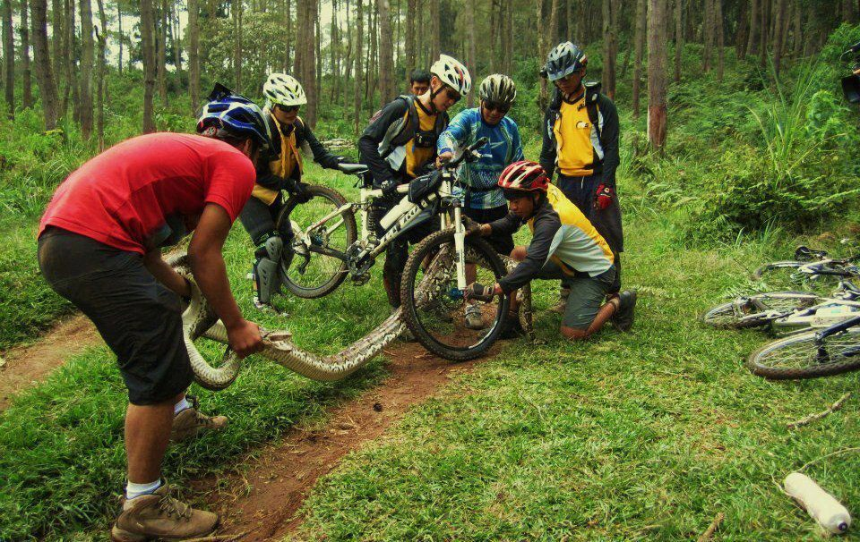 To Early Morning Riders: you see snakes/lizards a lot?-bigazzsnake.jpg