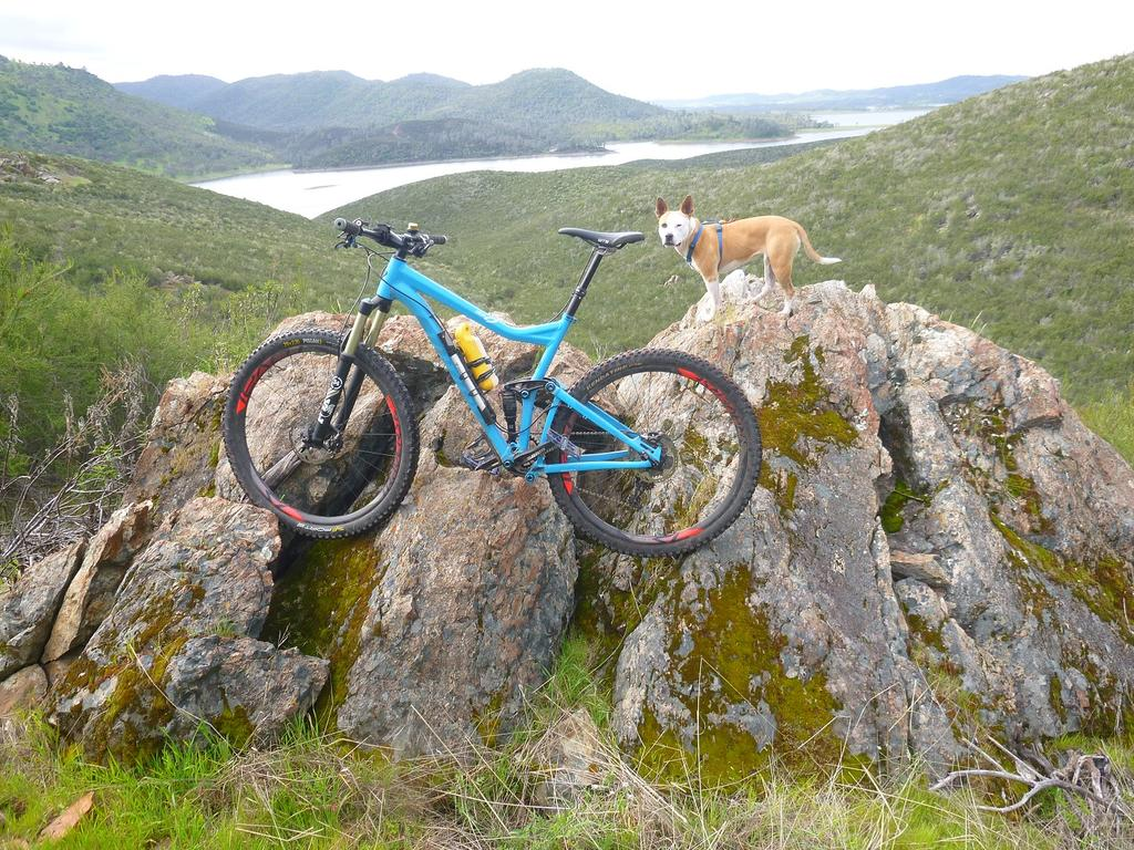 Dogs with Passion-bike-rocks.jpg