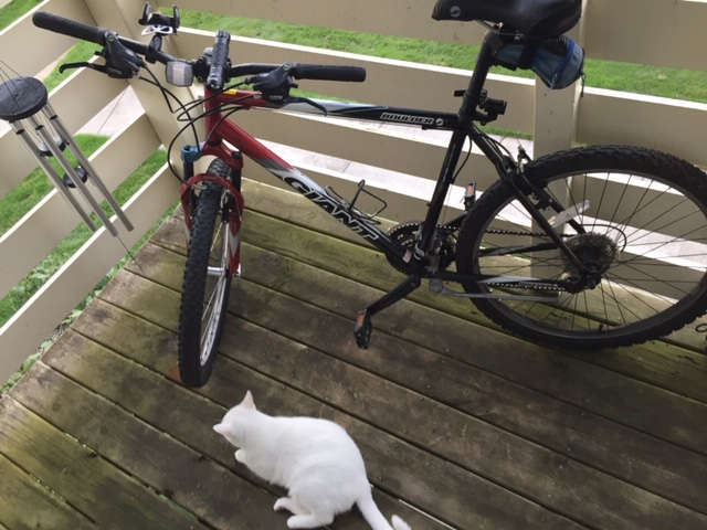 Roll Call:  How bigga boy are ya? What bike do you ride?-bike-pic-1.jpeg