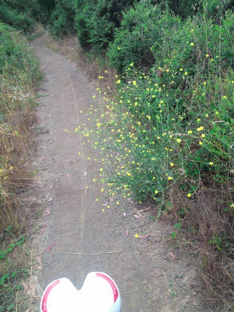 Ride report - Fog &  Flowers McGibber certified.-bike-track-flower-1.jpg