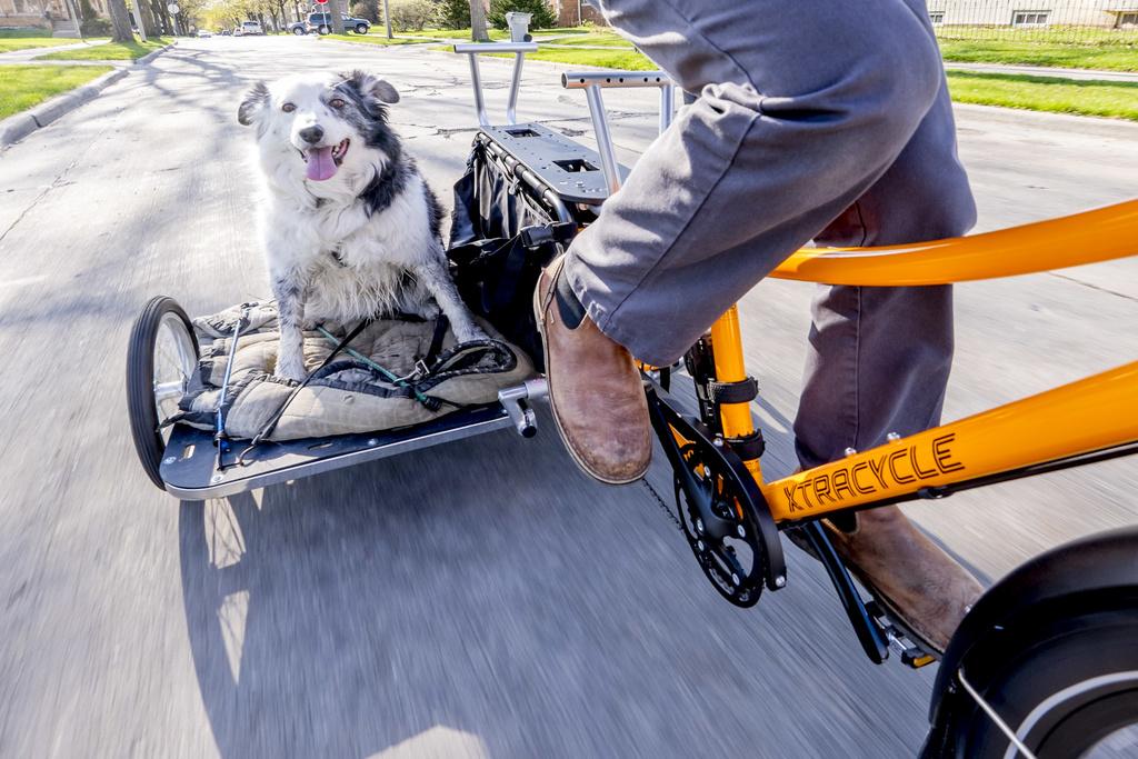 Taking the Dog - Surly Big Dummy-bike3.jpg