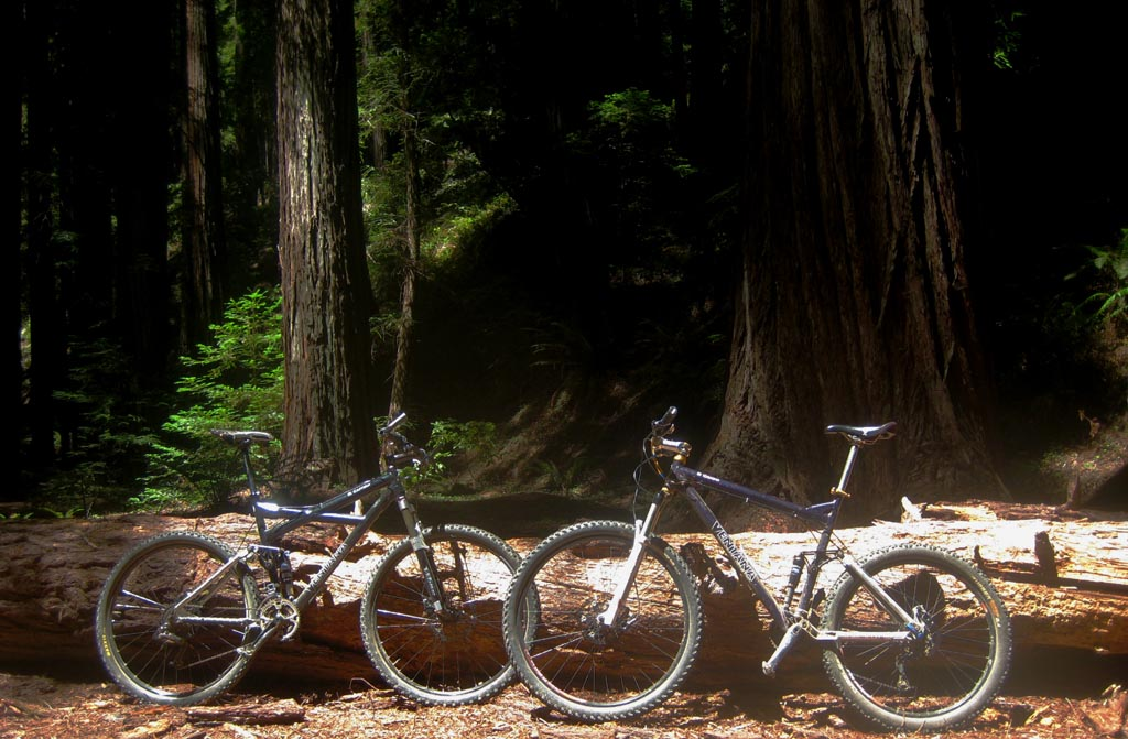 Picture Thread 2010-bikeamongbigtrees.jpg