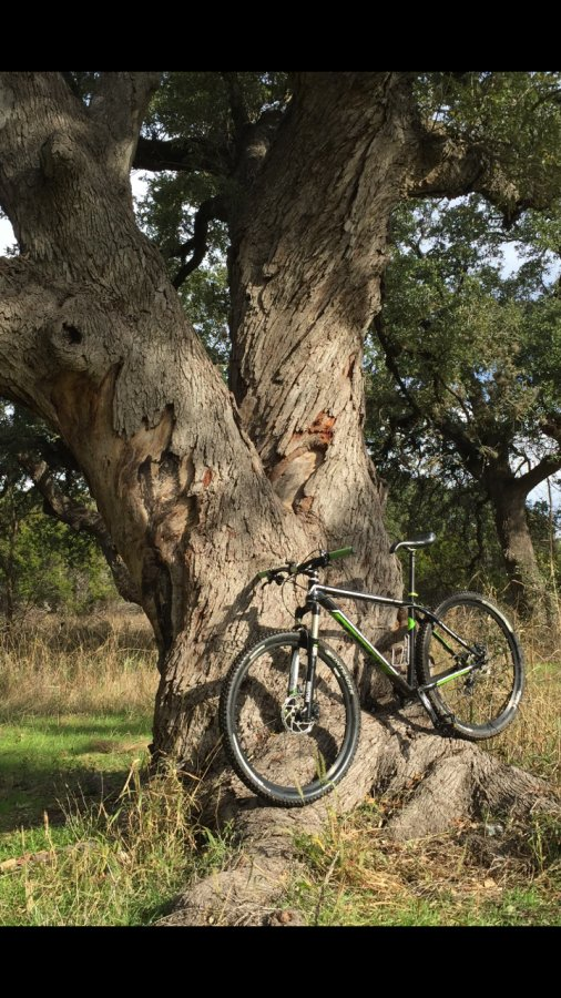 What did You do today on your mountain bike?-bikeoak.jpg