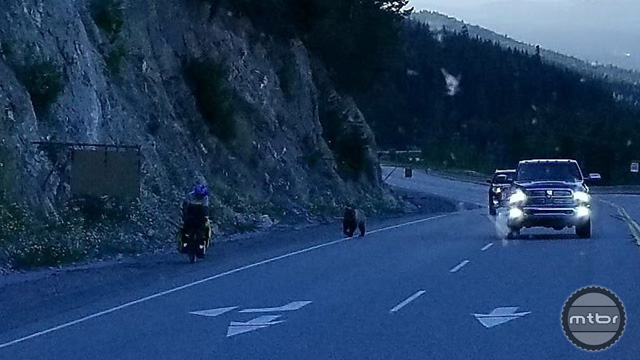 13. Grizzly Bear Chases Cyclist Down Highway