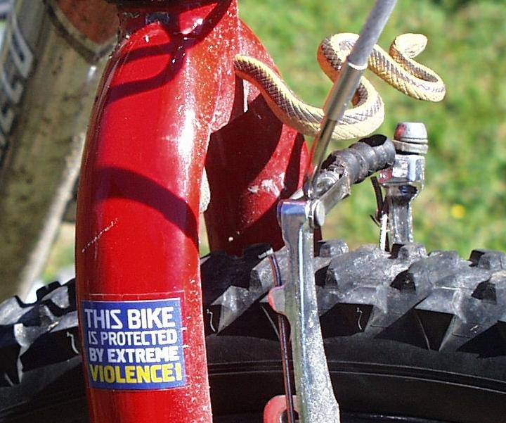 Suggestions on uglying a bike-bikesecurity.jpg