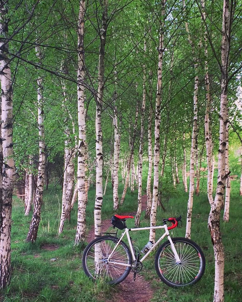 Post Your Gravel Bike Pictures-birchbike.jpg
