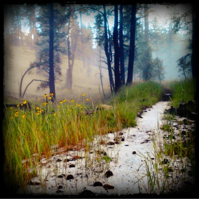 """""""The fog comes on little cat feet""""-blogger-image-1391003995.jpg"""