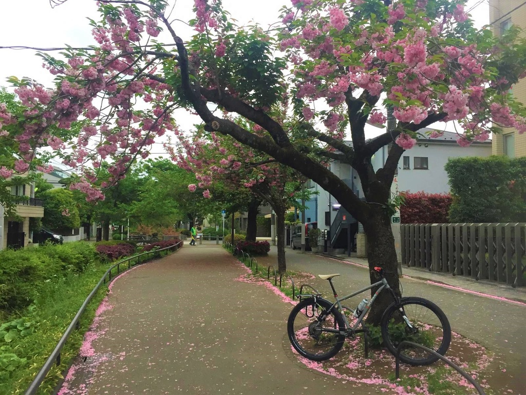 How was your commute today?-blossoms-2.jpg