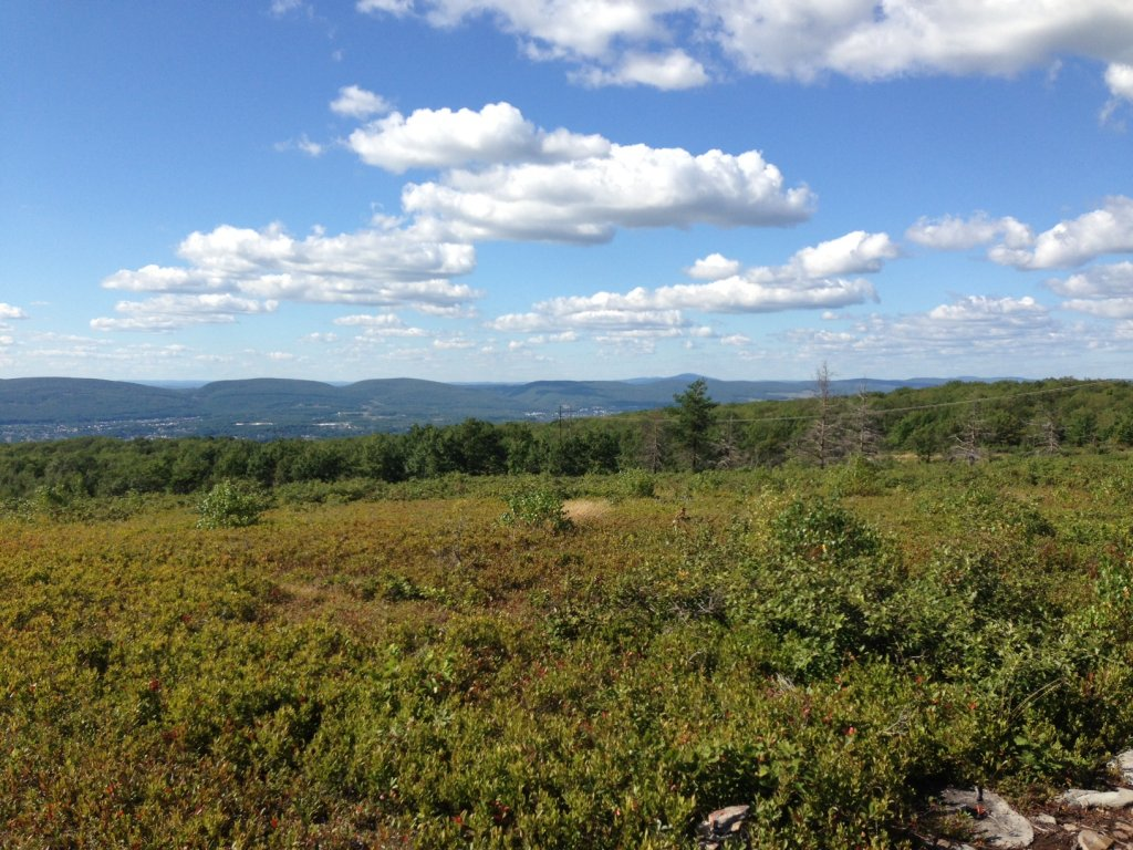 Moosic Mountain NEPA - Anyone riding today 8-23-13?-blueberry-082313a.jpg