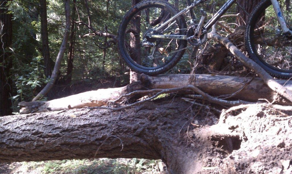 Demo Trail Conditions with photos of large downed trees-braile%2520one.jpg