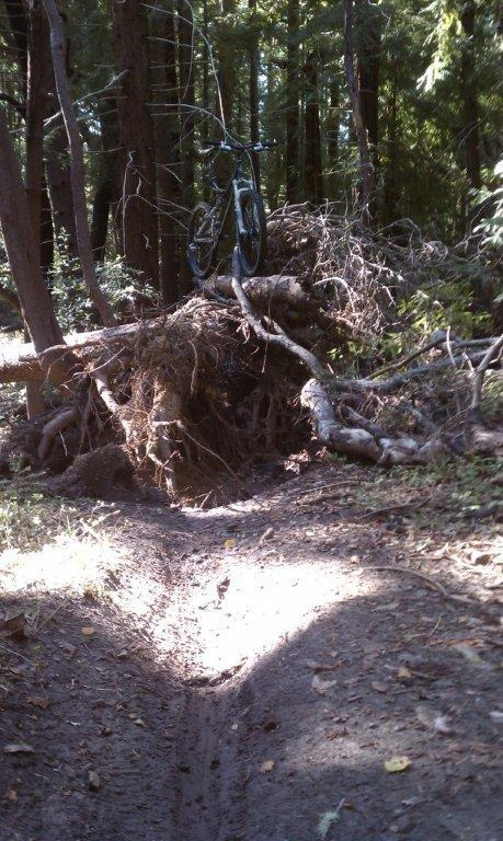 Demo Trail Conditions with photos of large downed trees-braile%2520two.jpg