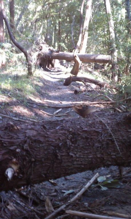 Demo Trail Conditions with photos of large downed trees-brailethree.jpg