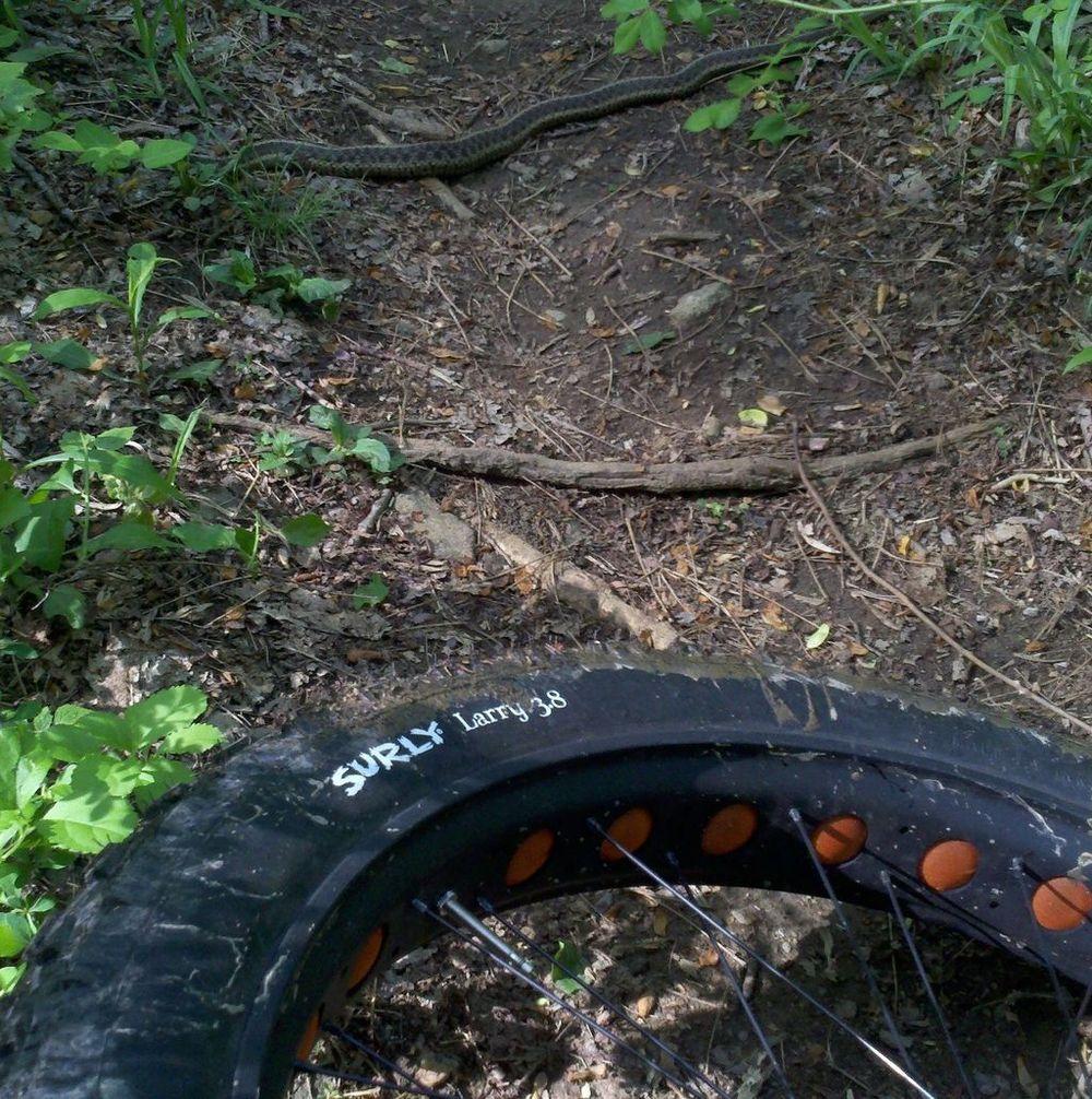 Daily fatbike pic thread-brandywine_snake.jpg