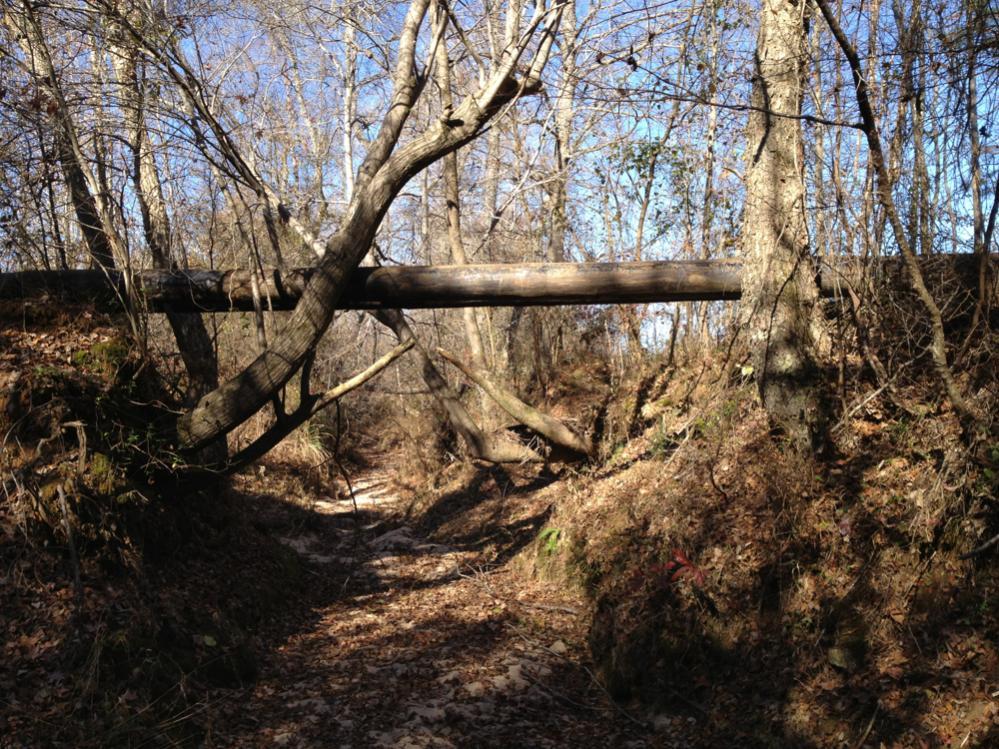 Building a pole bridge-bridge-poles2.jpg
