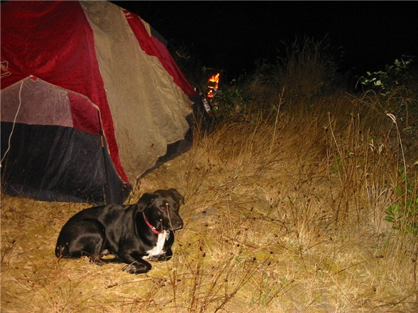 Hobo camping with the Grand Dog-buddy-island-parker-sept-4-5-2011-031.jpg