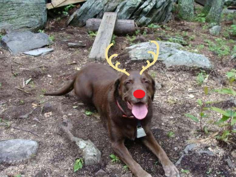 Happy Holidays fellow MTBRers-buddy_reindog.jpg