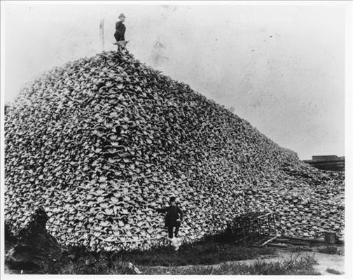 Name:  buffalo_bones_zps77761a6a.jpg Views: 155 Size:  51.2 KB