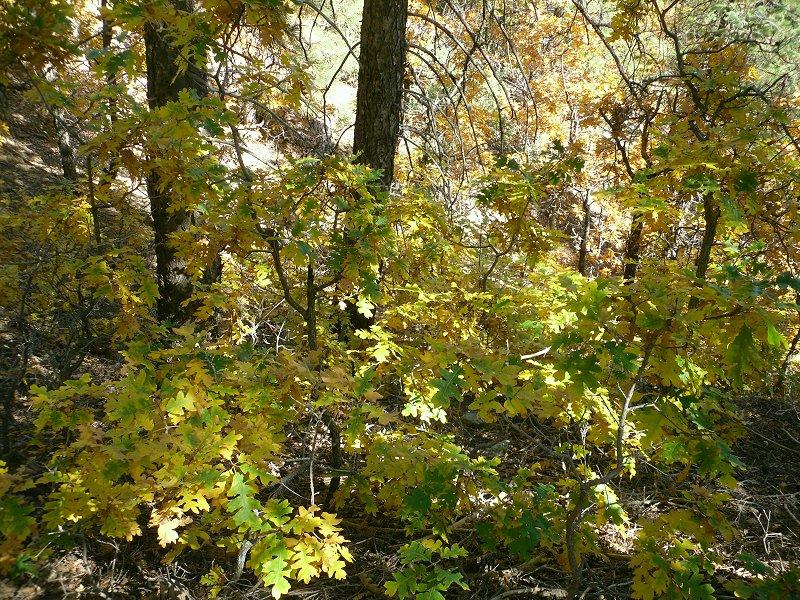 Fall colors in Flag-bw-025.jpg