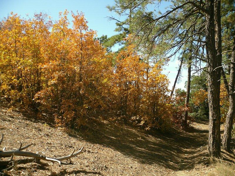 Fall colors in Flag-bw-029.jpg
