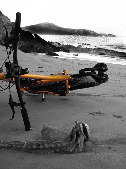 Daily fatbike pic thread-bw-fish-bike.jpg