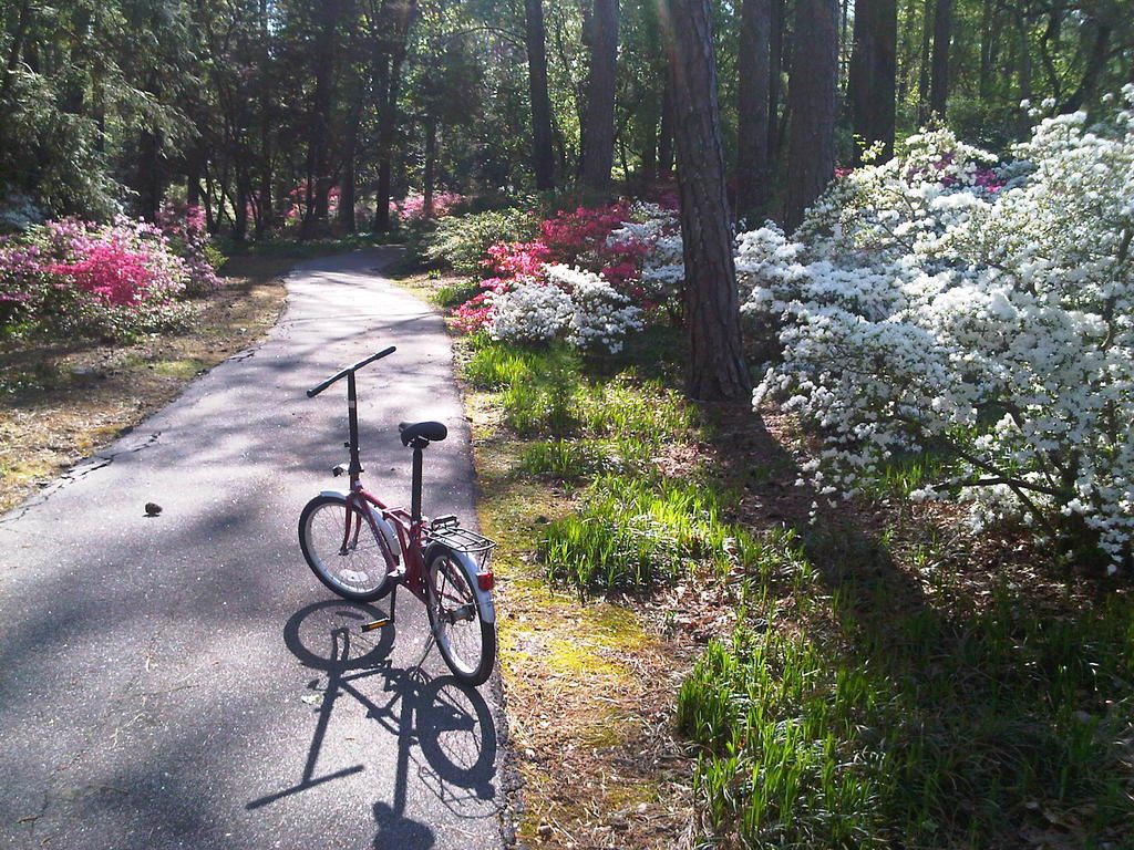 Lets seew pictures of any folder-callaway-bike-path.jpg
