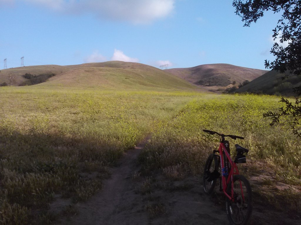 What did You do today on your mountain bike?-cam00135.jpg