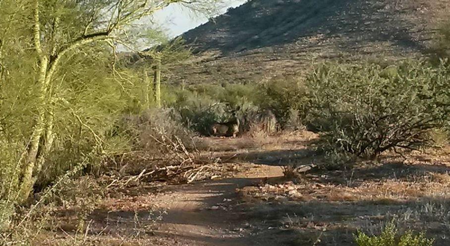 Photo Friday 11-14: Srsly?-capture-deer.jpg